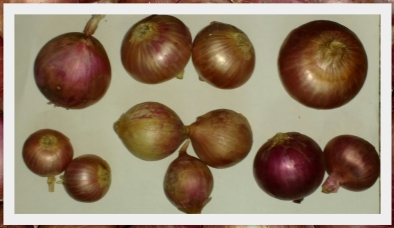 Different Verities of Onion